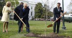 الشجرة وقت زراعتها