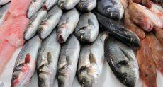 أسماك ـ صورة أرشيفية