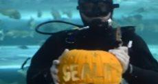 غواص يحتفر قرع العسل تحت الماء