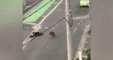 خنزير يهاجم أحد المارة
