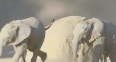 الفيلان الصغيران زولى وكايا