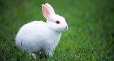 ارنب - أرشيفية