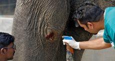 مستشفى لعلاج الفيلة بالهند