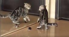 """قط """"يبحث عن نفسه"""" أمام المرآة"""