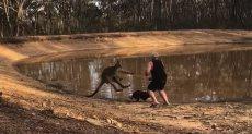 جانب من مشاجرة بين رجل وكنغر فى أستراليا