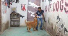 مدرب كلاب