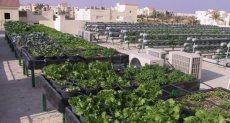 زراعة خضروات أعلى أسطح المنازل