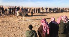 الهجن المصرية تستعد لسباق شرم الشيخ مارس المقبل