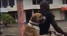 كلب وصديقه على العجلة