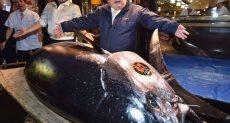 سمكة التونة ذات الزعانف الزرقاء