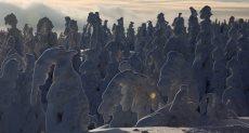 مشاهد رائعة رسمتها الثلوج على الأشجار في بولندا