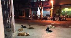 الكلاب تنتظر صديقها لويز أمام المستشفى