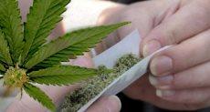 مخدر الماريجوانا