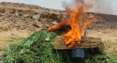 الشرطة تحرق أراضى مزروعة بالمخدرات