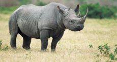 وحيد القرن - صورة أرشيفية
