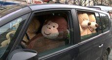 مبادرة الدببة