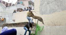 محاولة القبض على الفهد