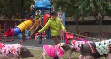 4 خنازير وكلب فى منزل تايوانية