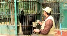 إطعام الحيوانات