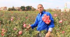 حصاد الورد