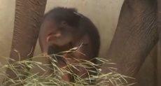 حديقة حيوان بلجيكا