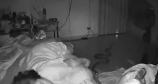 ثعبان ضخم يتسلل إلى منزل مسنة