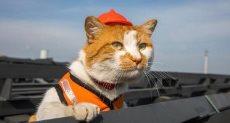 قطة موستيك