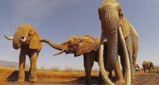 ملكة الأفيال قبل وفاتها بوقت قصير