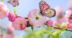 فصل الربيع - أرشيفية