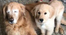الكلبين فى منزل صاحبهم