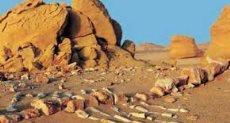 وادي الحيتان بالفيوم