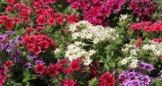 زى البنات أشكال وألوان.. شاهد زهور الربيع فى معرض الأورمان