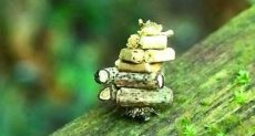 حشرة -أرشيفية