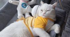 قطة صغيرة في حالة استرخاء