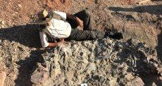 مقبرة ديناصورات