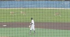 أرض ملعب البيسبول الرياضى