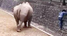 سيدة تقتحم قفص وحيد القرن لإعادة هاتفها