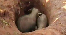 سقوط فيلين في حفرة