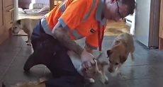انقاذ كلب