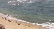 شاطئ الاسكندرية