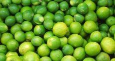 اسعار الليمون