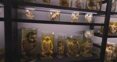 متحف محمد نجيب