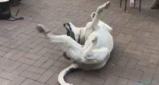 الكلب يرقص