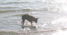 شواطئ مخصصة للكلاب