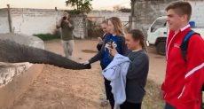 الفتيات يلعبن مع الفيل