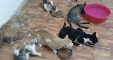 صاحبة أول ملجأ قطط