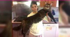 أطول قط في العالم