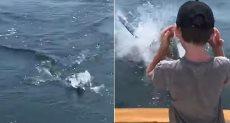 سمكة القرش تتجه نحو الصياد