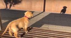 الكلب يقف أمام ظله