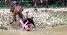 حصان يلقى سياح على الأرض